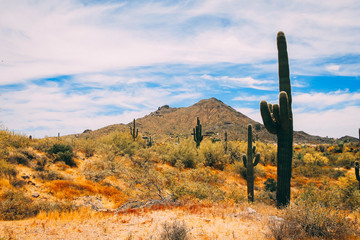 Scottsdale Desert in the Spring