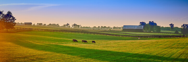 Foto auf Acrylglas Wiesen / Sumpfe Thoroughbred Horses Grazing at Sunset