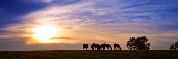 Horses Grazing With Sunset