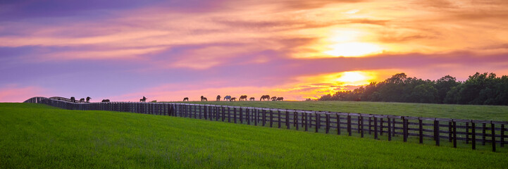 Thoroughbred Horses Grazing at Sunset Wall mural