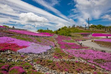 Spoed Foto op Canvas Roze 茶臼山高原