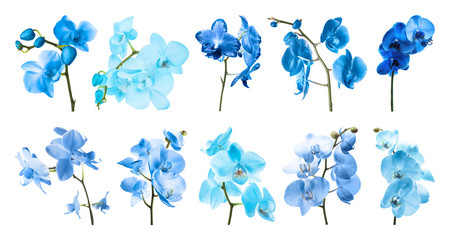 Set of different blue orchid flowers on white background