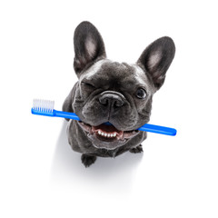 dental toothbrush  row of dogs