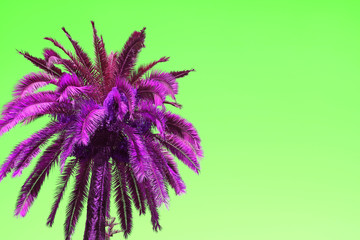 Surreal Pop Art Style Vivid Purple Palm Tree on Neon Green Background with Copy Space