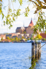 Tree Detail with Leaves in Spring and Old City / Twigs and leaves of willow tree at view across Warnow river toward old houses of city of Rostock, Mecklenburg, Germany (copy space)