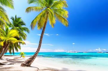 Obraz Kokosowe drzewa palmowe na białej piaskowatej plaży na morzu karaibskim, Saona wyspa, Dominikana - fototapety do salonu