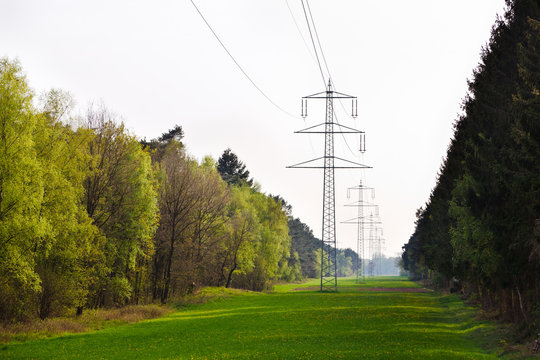 Power Lines Cutting Through Forest