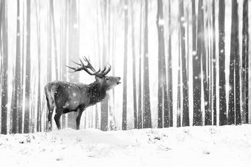 Wall Mural - Noble deer in a winter fairy forest. Snowfall. Winter Christmas holiday image. Winter wonderland. Black and white.