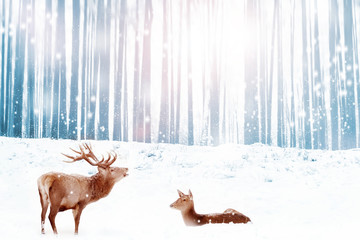 Wall Mural - Family of noble deer in a snowy blue winter forest. Christmas fantasy image. Winter wonderland.