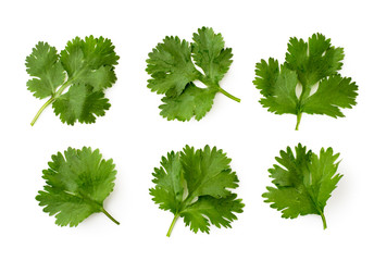 Set of cilantro leaves on a white, isolated. The form of the top.