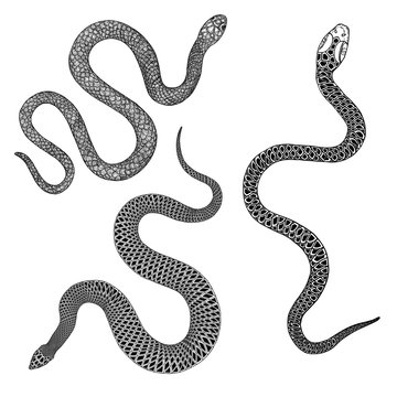 Set of snakes drawing illustration. Black serpent isolated on a white background tattoo design. Venomous reptile, drawn witchcraft, voodoo magic attribute for Halloween.  Vector.