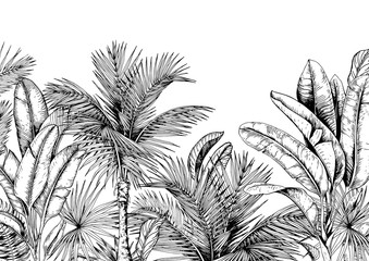 Tropical card with palm trees and banana leaves. Black and white. Hand drawn vector illustration.