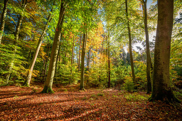 Stunning and colorful forest in the autumn, Europe