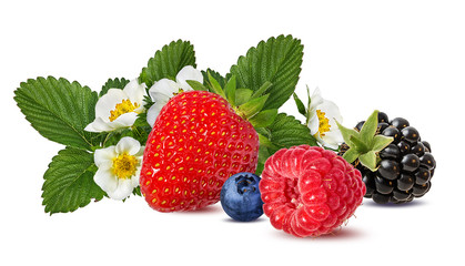 Fototapete - Collection of fresh berries isolated on white background