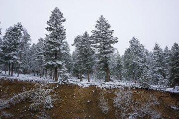 Snowy treeline and forest at Rocky Mountain National Park