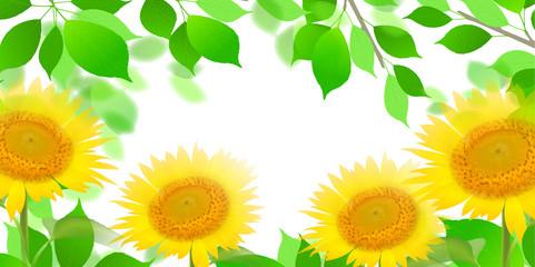 ひまわり 夏 花 背景