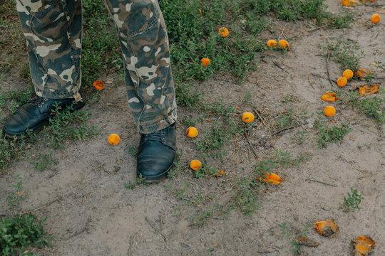 Legs are on meadow. Nearby are ripe apricots