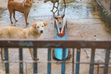 Autocollant pour porte Panda Thai dog in the garden