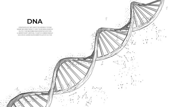 DNA. Abstract 3d polygonal wireframe DNA molecule. Medical science, genetic biotechnology, chemistry biology, gene cell concept vector illustration or background. innovation technology concept
