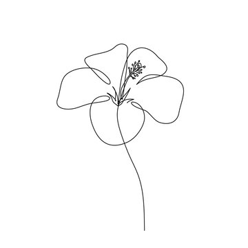 abstract hibiscus flower. Continuous line drawing. Minimalist botanic art