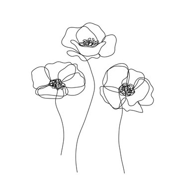 Abstract poppies flower. Continuous line drawing. Minimalist  modern art. Editable line.