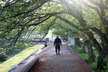 An old man with cane enjoying walk at one park in Beppu