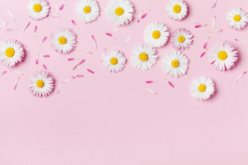 Daisy flowers on pink pastel table top view. Summer composition in flat lay style.
