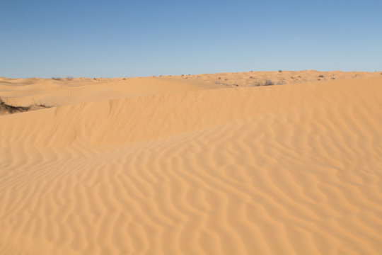 Patterns in the sand formed by the wind and a little vegetation in the dunes of the Northern Sahara desert in Tunisia