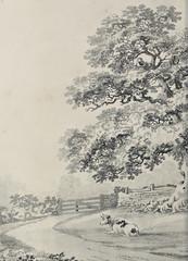 Drzewa - 271072448