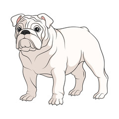Color illustration of a white english bulldog. Isolated vector object on white background.