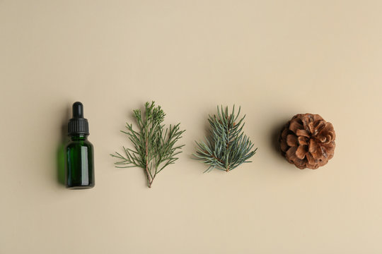 Flat lay composition with bottle of essential oil and pine branches on color background