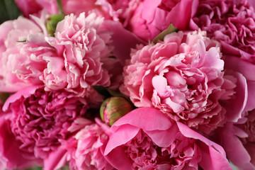 Obraz Fragrant peonies as background, closeup view. Beautiful spring flowers - fototapety do salonu