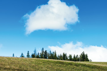 simple nature scenery with trees and cloud. spruce trees on hill beneath a fluffy cloud. beautiful scenery