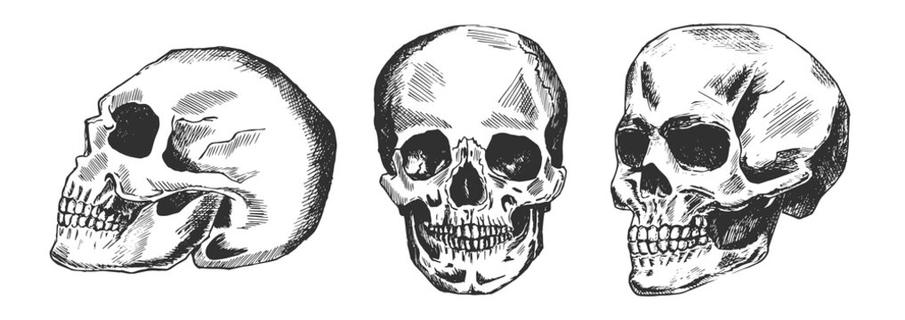 Human skull in different position
