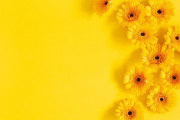 Flowers composition. Yellow gerbera flowers on yellow background. Summer concept. Flat lay, top view, copy space