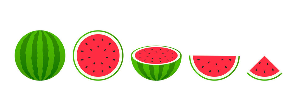 Set of fruits. Summer fruit collection. Fruits watermelon. Vegetarian and ecology food. Vector illustration.