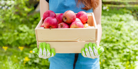 Photo of girl in apron with box with apples in garden