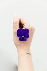 A purple pansy on a woman hand light like a butterfly.