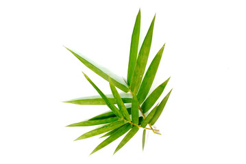 Bamboo leaves on white background.(with Clipping Path).