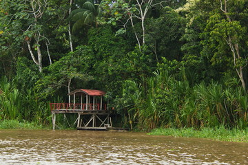 Jetty in rainforest at Amazonas river near Leticia in Colombia