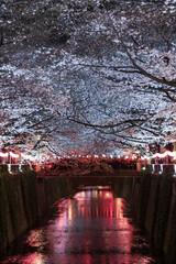 Poster Bordeaux Sakura, Cherry Blossom flower with light at night in Meguro river, Tokyo, Japan