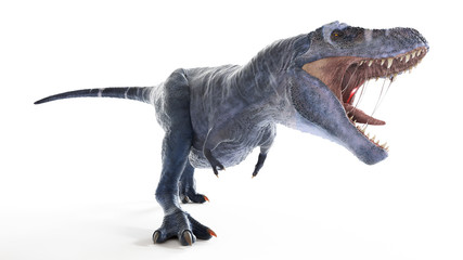 3d rendered illustration of an isolated t-rex