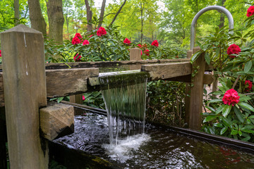 tranquil water feature in a lush Beautiful green woodland garden with dense foliage.
