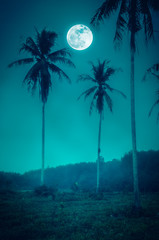 Wall Mural - Night landscape with bright full moon and foggy.