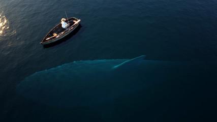 Fishing, big shark underwater
