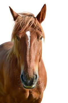 Horse head isolated on white