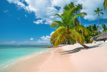 Tropical caribbean island Saona, Dominican Republic. Beautiful beach, palm trees and clear sea.