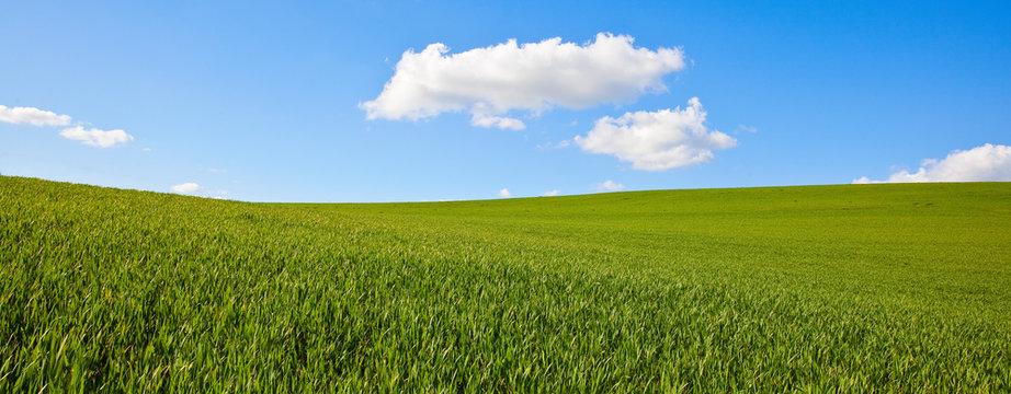 Campagne et agriculture sur fond de ciel bleu