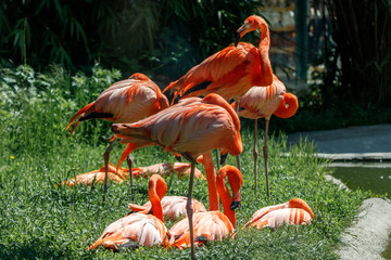 In de dag Flamingo Flamingos