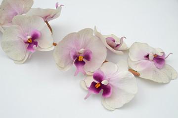 Printed roller blinds Orchid Orchidee in Rosa/Weiß auf Holzstäben / Weißer Hintergrund